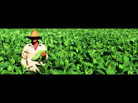 TPE: Le tabac, un marché en constante évolution