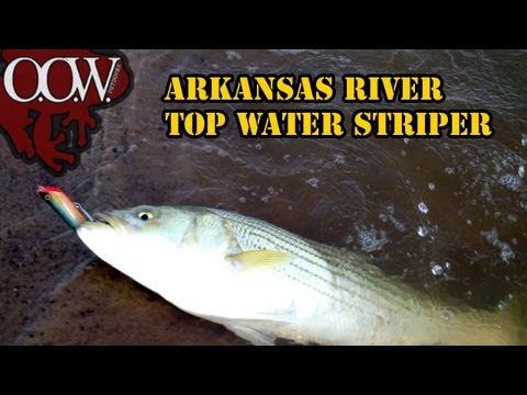 Awesome Striper Fishing Arkansas River - OOW Outdoors