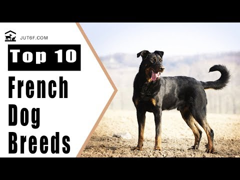Top 10 French Dog Breeds