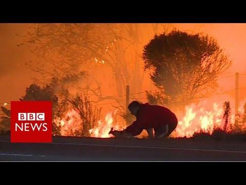 Man saves rabbit from California fires – BBC News