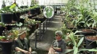 Nepenthes Highland Nurseries @ Borneo Exotics Part 1