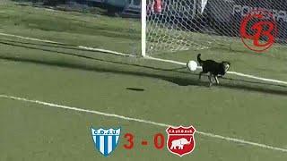 فيديو: في الأرجنتين يتقن الجميع كرة القدم...حتّى الكلاب! …