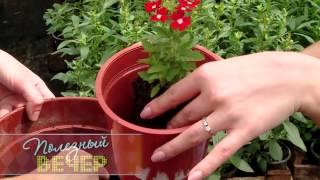 видео Цветы на балконе
