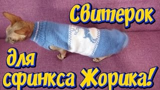 Одежда для сфинкса  Решили утеплить кота телогрейкой, донской сфинкс