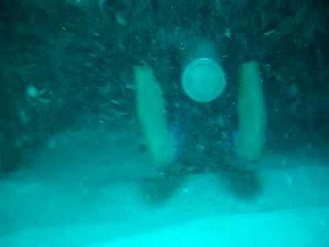 Cayman Dive - Swim Through