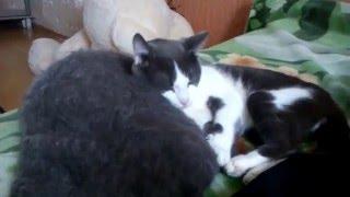 кот и платок