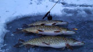Такого КЛЁВА я не ожидал на БАЛАНСИР и РАТТЛИНЫ Зимняя рыбалка 2021