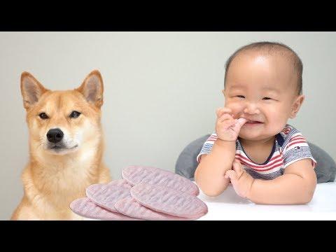 Dog and Baby Eat Strawberry Wafers Mukbang. [Ep. 3]