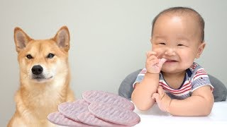 Dog and Baby Eat Strawberry Wafers Mukbang. [Ep. 3]