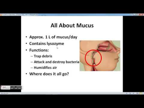 Chapter 22 Respiratory System part 1 - YouTube