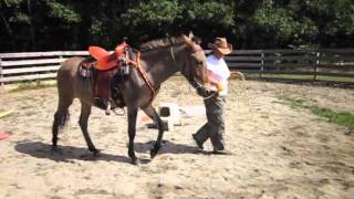Saddle Training Rerun Mule - Part I:  Round Pen Work