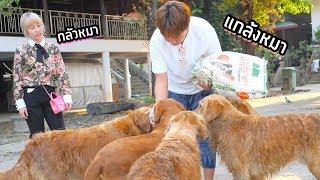 วันชิลๆ กับวัดไทยที่เต็มไปด้วยหมาโกลเด้น (กว่า 30 ตัว)