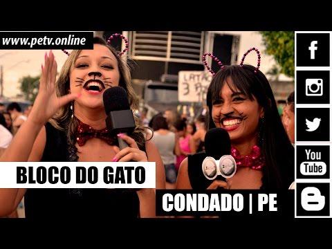 BLOCO DO GATO   CONDADO/PE