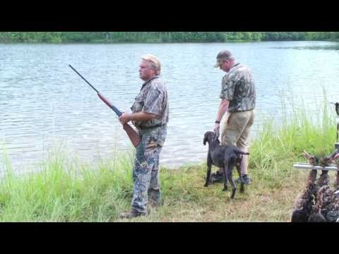 Gun Dog Broker In The Field With A German Shorthair, HRC Started Hunt Test