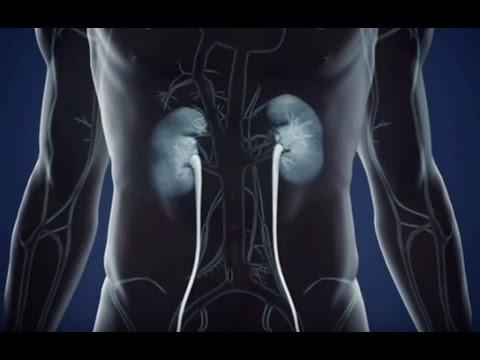 Жир и токсины