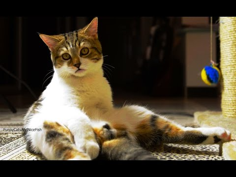 Сats for laughs | Funny Kittens and Cat Videos Compilation