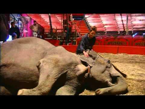 Cirque Pinder-le Film Bonus 03 Les éléphants De Sophie.avi