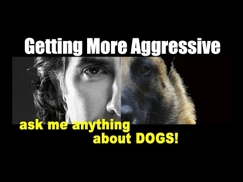 My German Shepherd is Getting More AGGRESSIVE on Leash - ask me anything - Dog Training Video