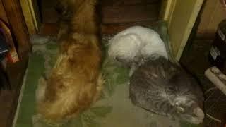 Картина маслом.Не то что люди а  кошки с  собакой дружат и спят  вместе.