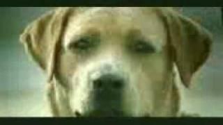 perrito con cuernos