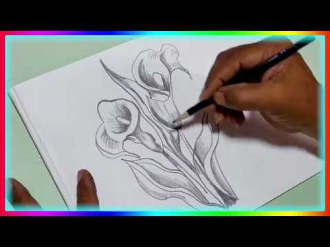 White Calla Lily Flower Drawing How To Draw Realistic Daily Art 6