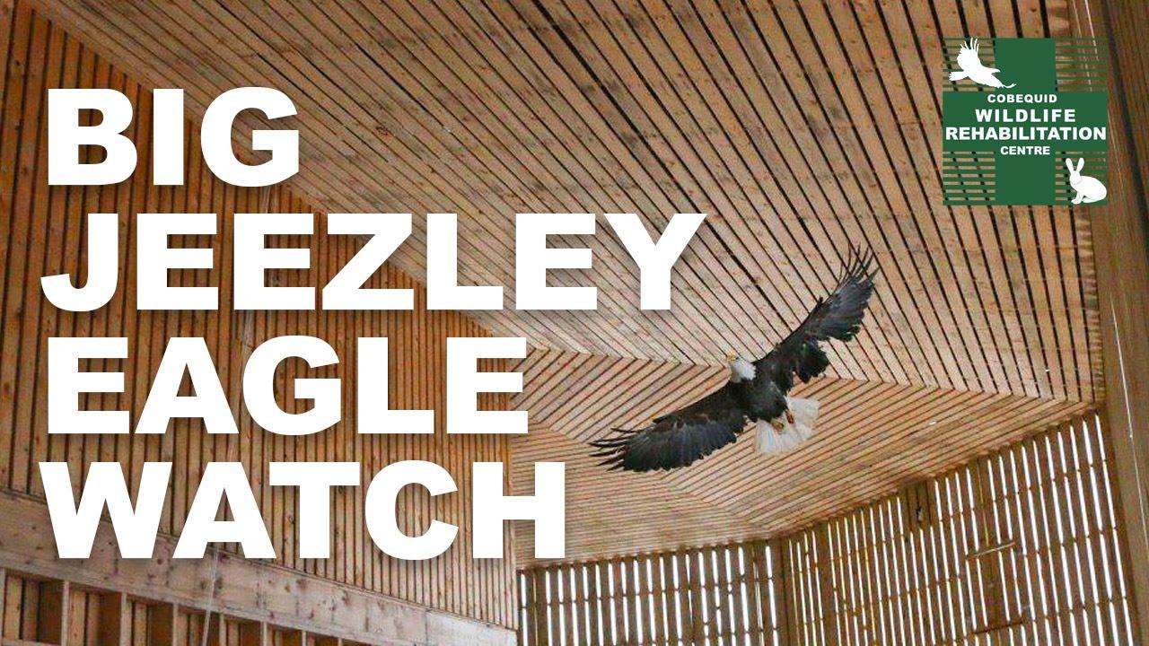 THE BIG JEEZLEY EAGLE WATCH