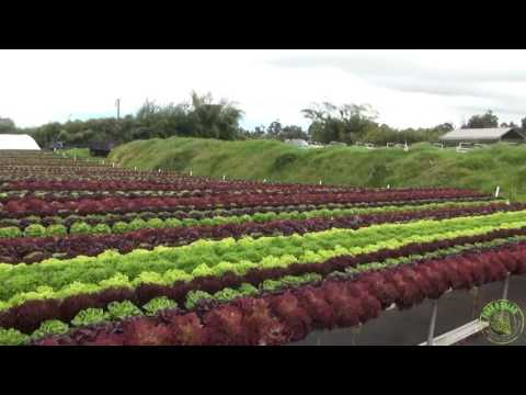 Know Your Farmers:  Waipoli Hydroponic Greens, Kula