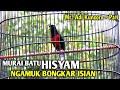Murai Batu Emosi Tinggi Gacor Nembak Bongkar Isian Murai Hisyam Mr Adi Kuncoro Pati  Mp3 - Mp4 Download