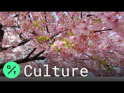 Could Coronavirus Fears Quiet Cherry Blossom Season in Japan?