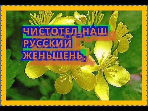 Домашний квас - как - zhenskoe-