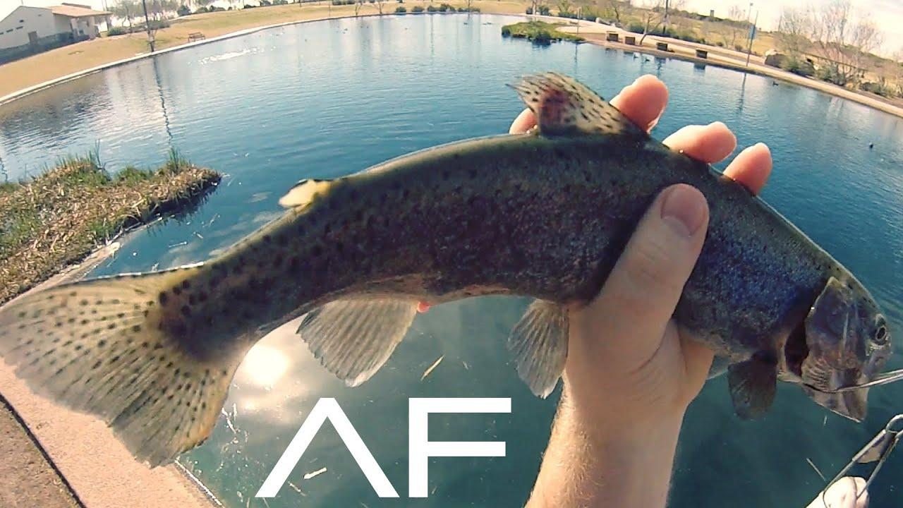 plenty more fish silver pond