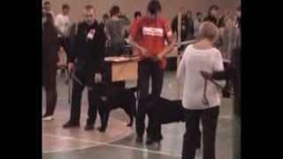 Выставка собак в Магнитогорске 07.11.2010