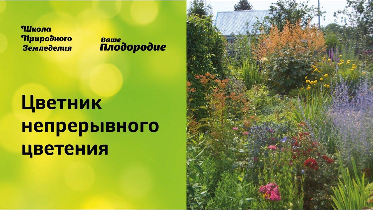 клумба непрерывного цветения из многолетников схема