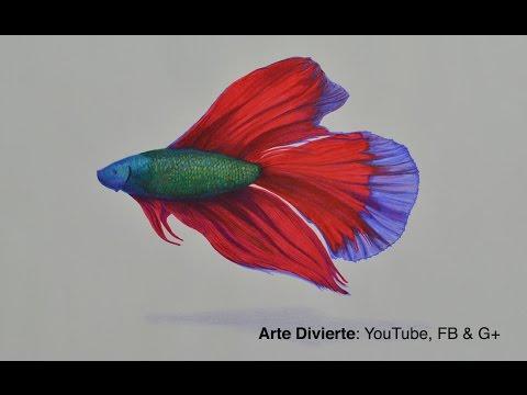 Cmo dibujar un pez beta con colores  YouTube
