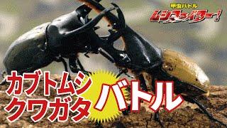 【公式】カブトムシ・クワガタムシの甲虫バトル ムシファイター!【フルバージョン】70min