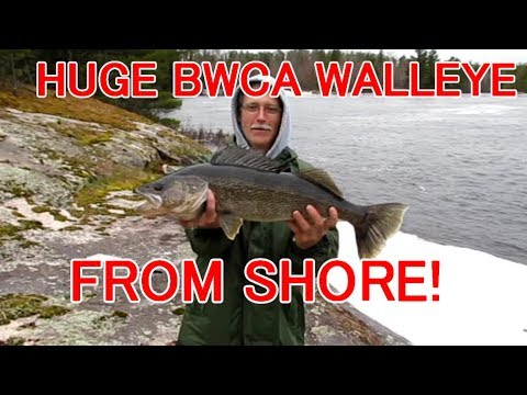 Catching HUGE BWCA Walleyes From Shore!