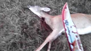 how to kill a wounded deer