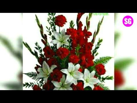 Beautiful Flowers Best Whatsapp Dp And Whatsapp Status