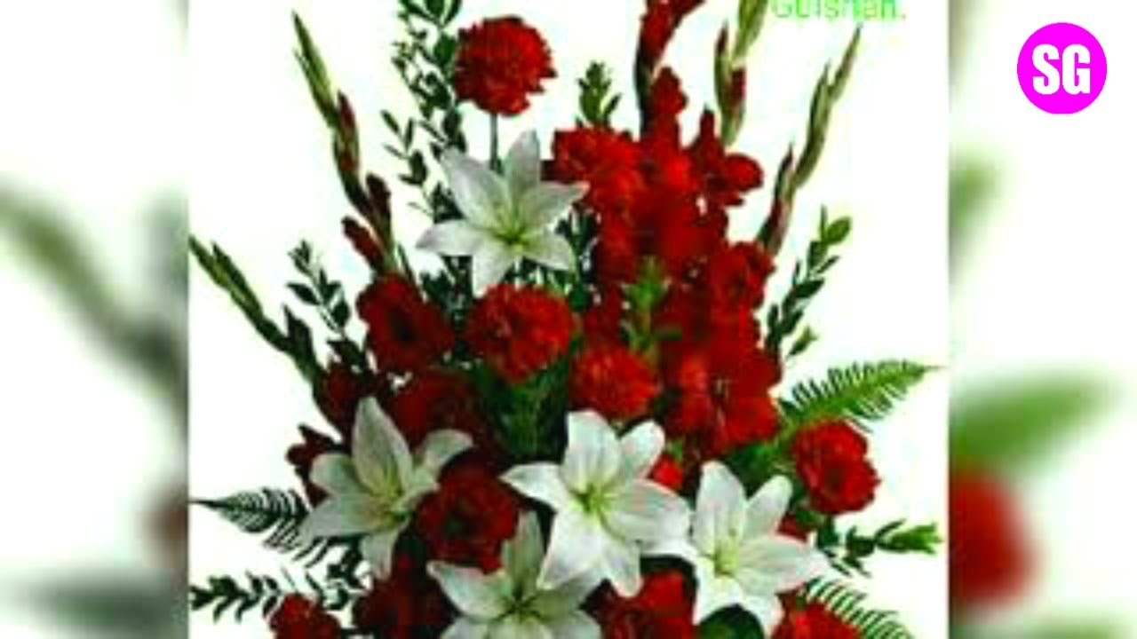 Beautiful Flowers Best Whatsapp Dp And Whatsapp Status Shafeeque Gulshan Sg Youtube