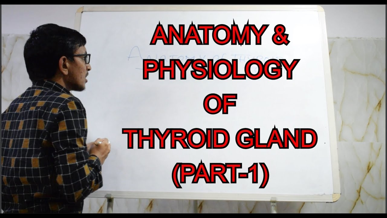 Anatomy And Physiology Of Thyroid Gland Part 1 Made Easy Youtube