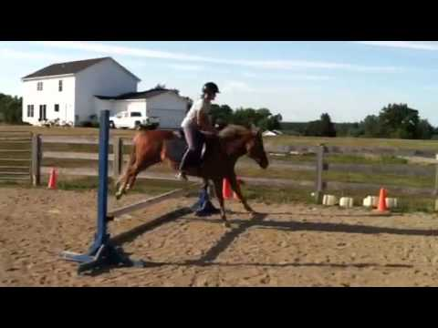 13.2hh Push Button Hunter Pony!