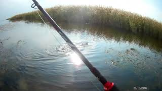 Осень Рыбалка на щуку Шансов поймать крупного хищника становится больше если рыбачить на джерк