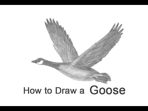 How To Draw A Canada Goose Flying