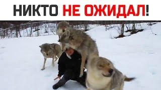 Мужчина прикормил волчицу, но потом никто не ожидал такого
