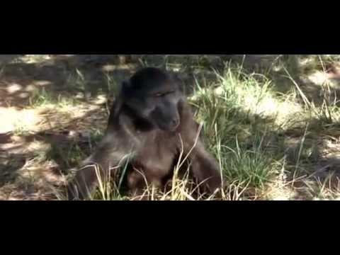 cười vỡ bụng xem động vật say xỉn vì ăn Rarula
