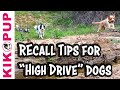 How is it possible to use Positive Reinforcement to train a RELIABLE recall?