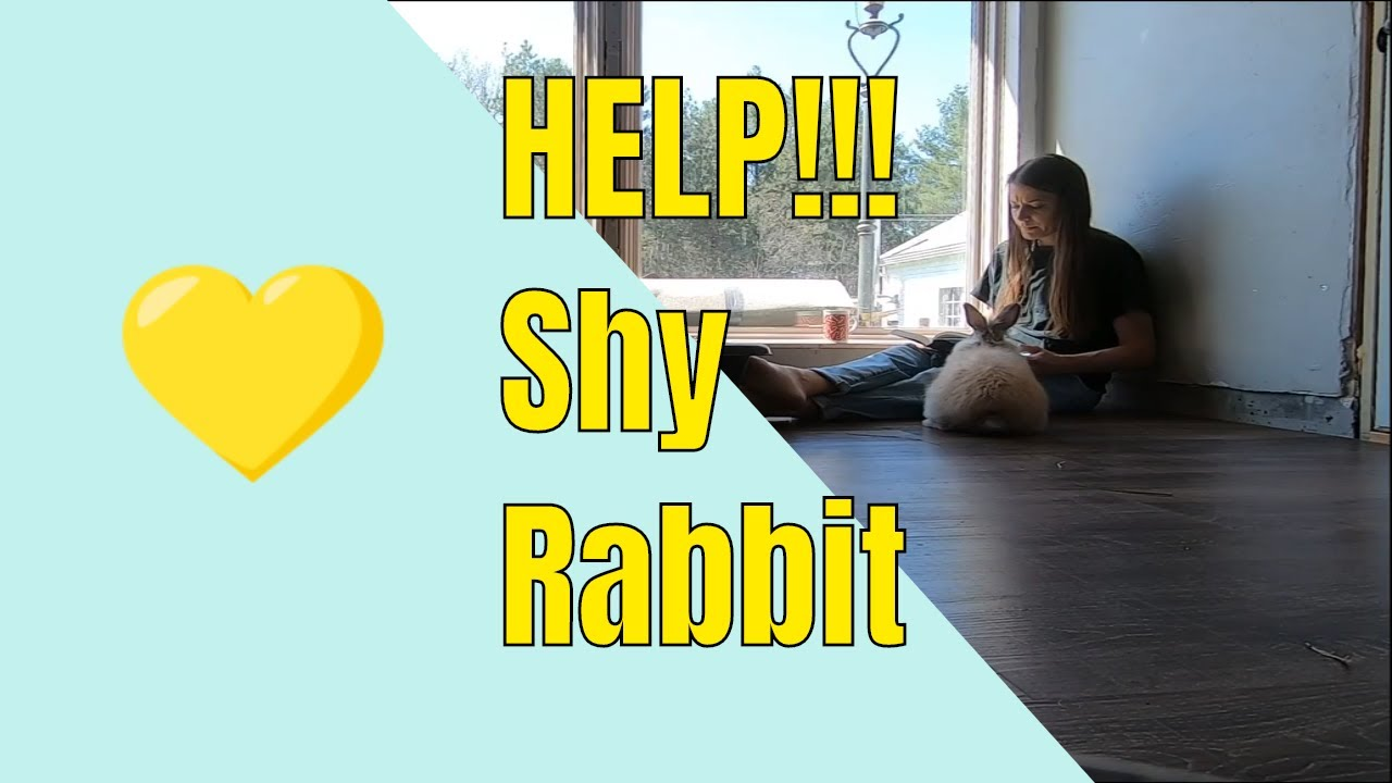 How to help a shy rabbit