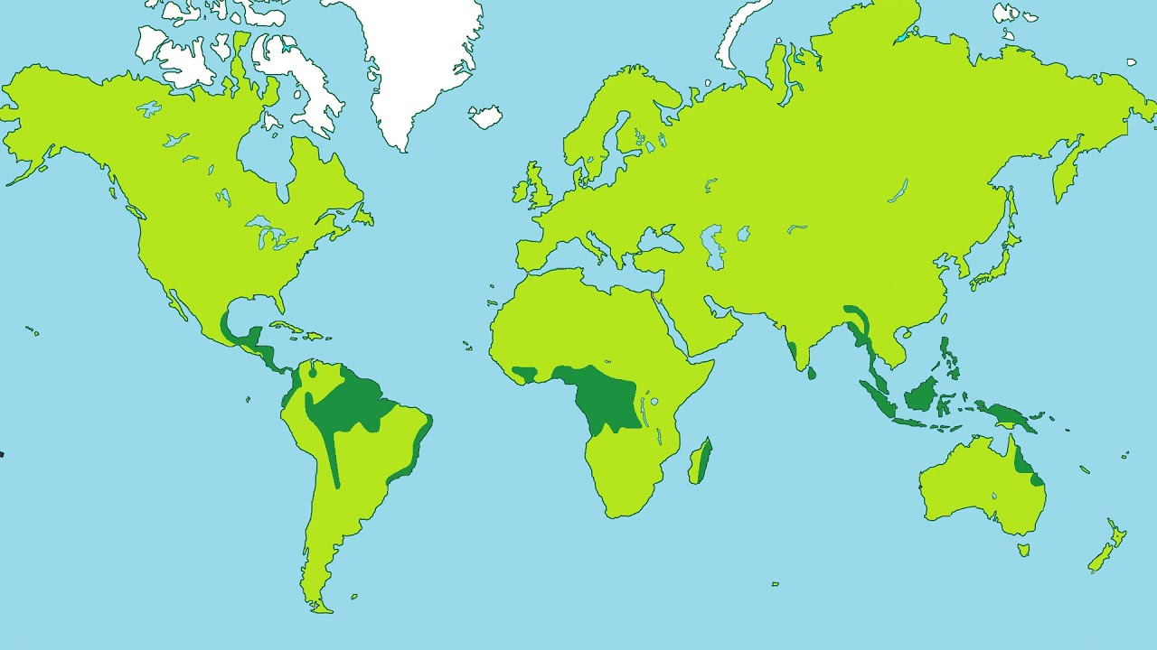 the decreasing numbers of rain forest in the world World map of forest cover change  a very important publication by the fao on the topic are the state of the world's forests that is  'the numbers in parentheses.