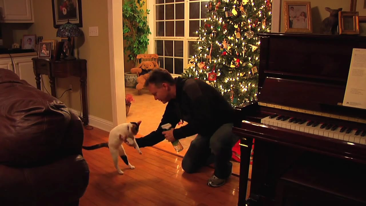 How to Keep the Cat out of the Christmas Tree - YouTube