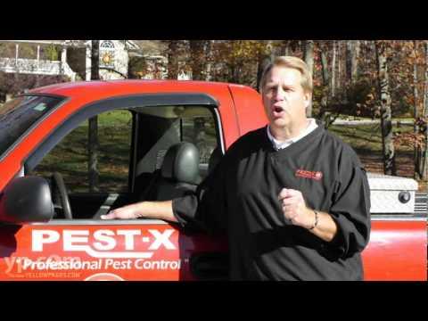 Pest-X Exterminating   Winston-Salem   Termite Remediation